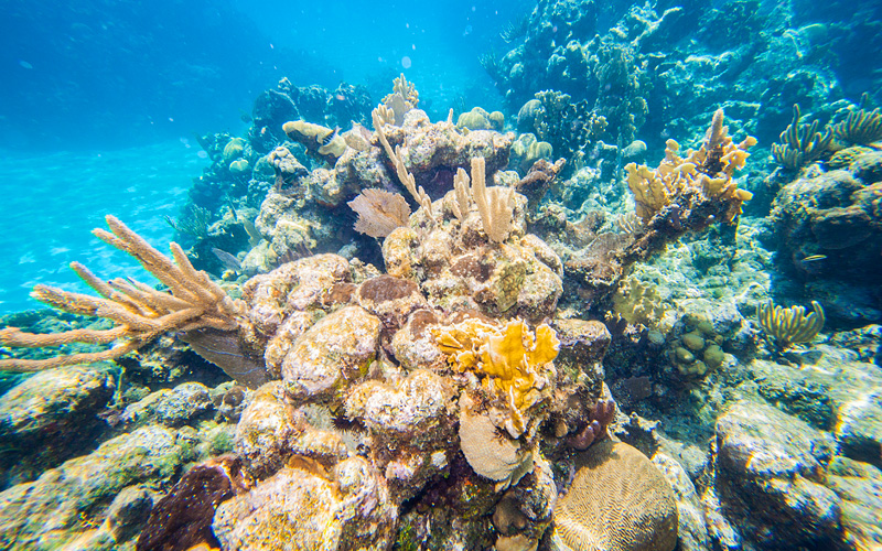 Reef in Roatan, Honduras Holland America Caribbean
