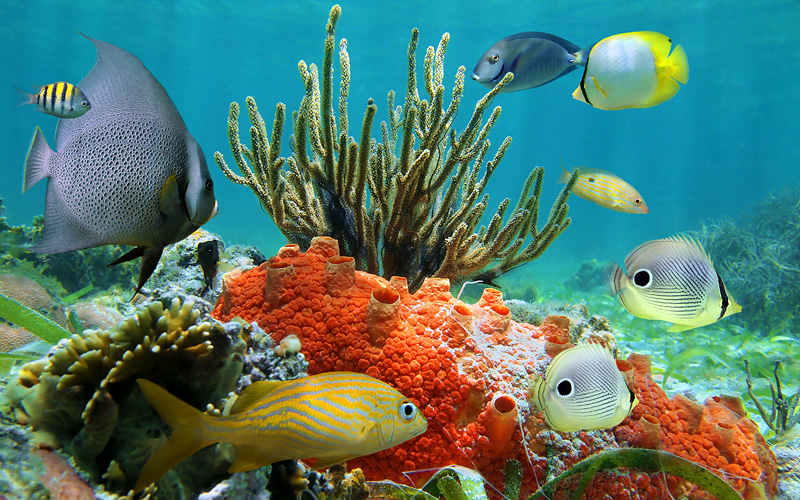 Western Caribbean coral reef Holland America Line