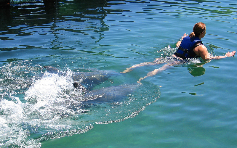 Dolphin ride excursion Mexico Holland America
