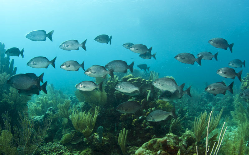 The waters of Bermuda is home to many coral fish