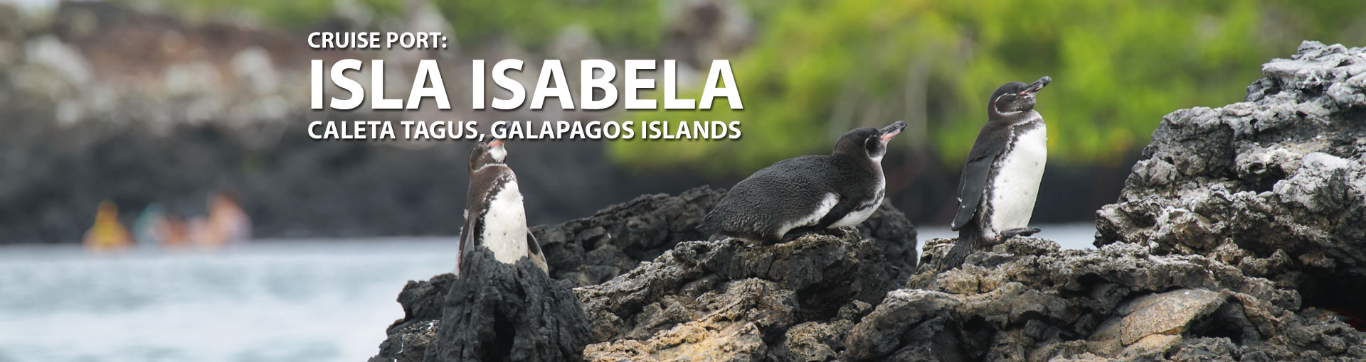 Cruises to Isla Isabela, Galapagos Islands