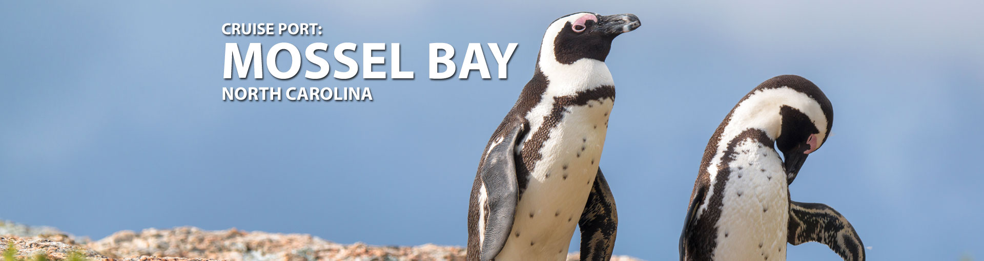 Cruises to Mossel Bay, South Africa