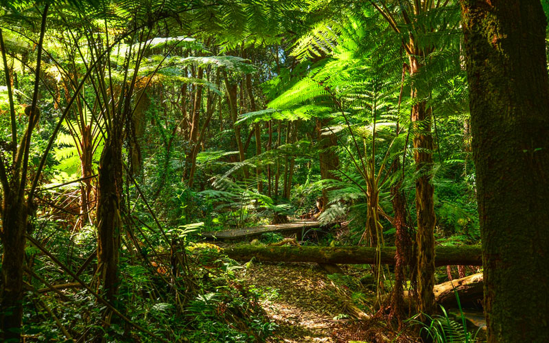 Norwegian Australia Rainforest