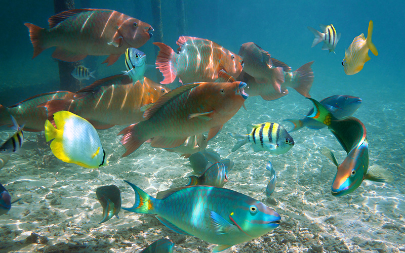 Tropical fish in Belize Nowegian Cruise Caribbean