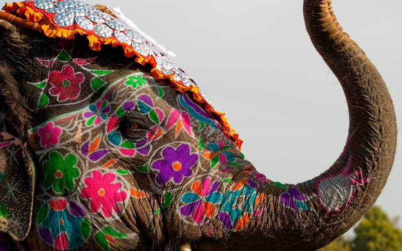 A painted elephant at the festival, Jaipur, India