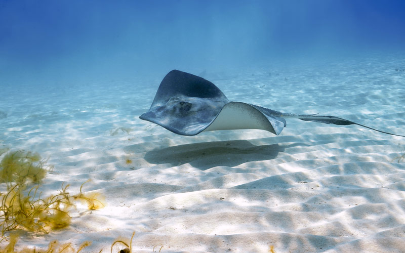 Stingray City, Grand Cayman Princess Caribbean