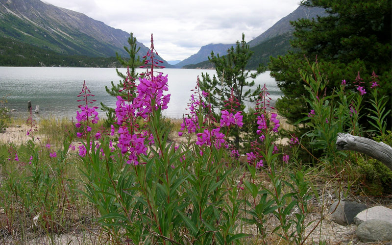 Bennet lake Alaska Regent Seven Seas