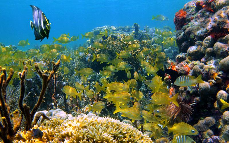 coral reef, Caribbean sea Regent Seven Seas Cruise