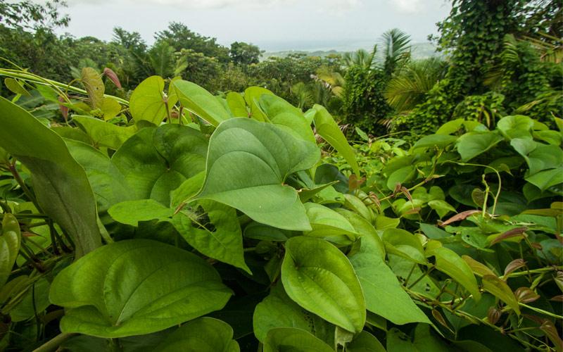 San Juan, Puerto Rico Regent Seven Seas Caribbean