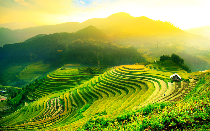 Rice fields on Terraced of Mu Cang Chai Yenbai Vie