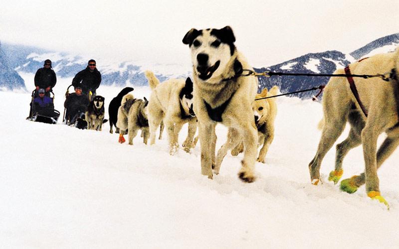 Royal Caribbean Alaska Cruisetour Sled Dogs