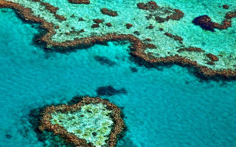 Royal Caribbean Australia Cruisetour, Reef