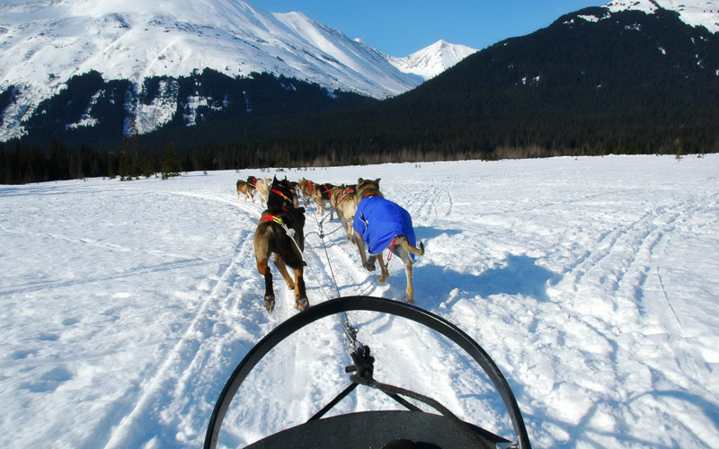 Dog Sledding Excursion Silversea Cruise Alaska