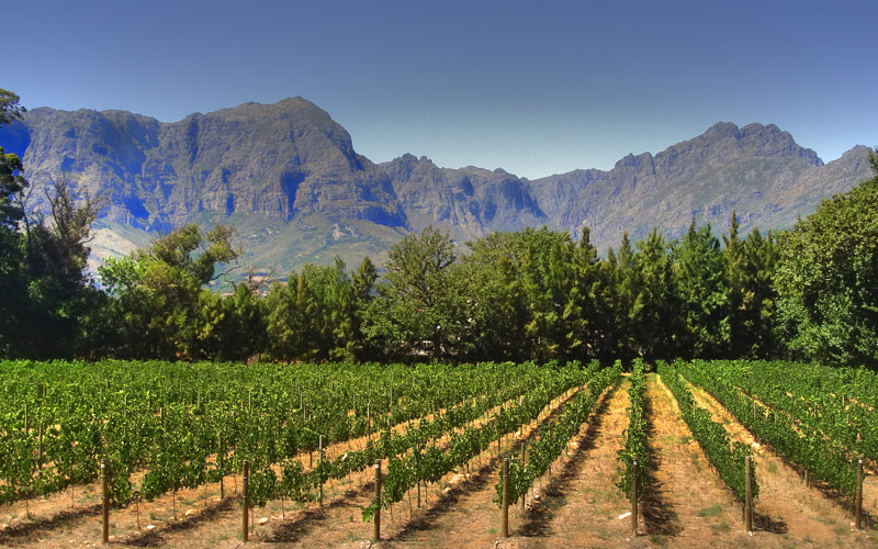 Vineyard in Franschhoek Cape Town Silversea Africa