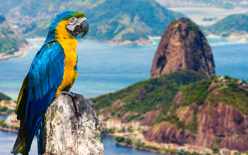 South America Cruisetours Gallery