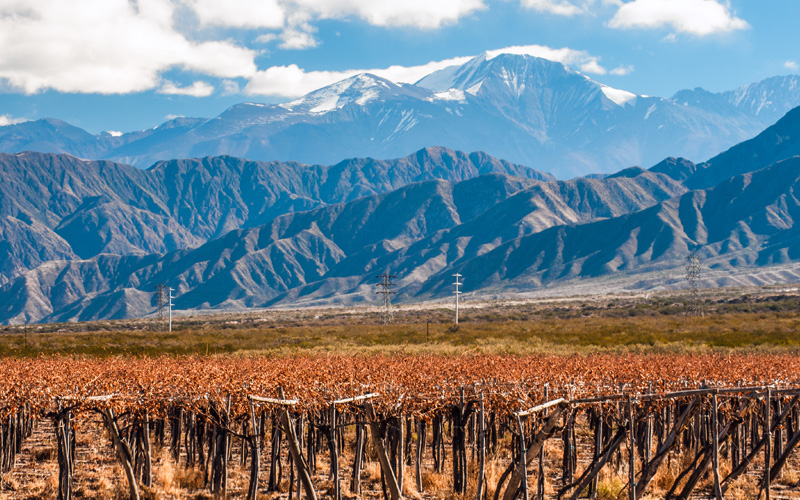 Volcano Aconcagua and Vineyard, Argentina