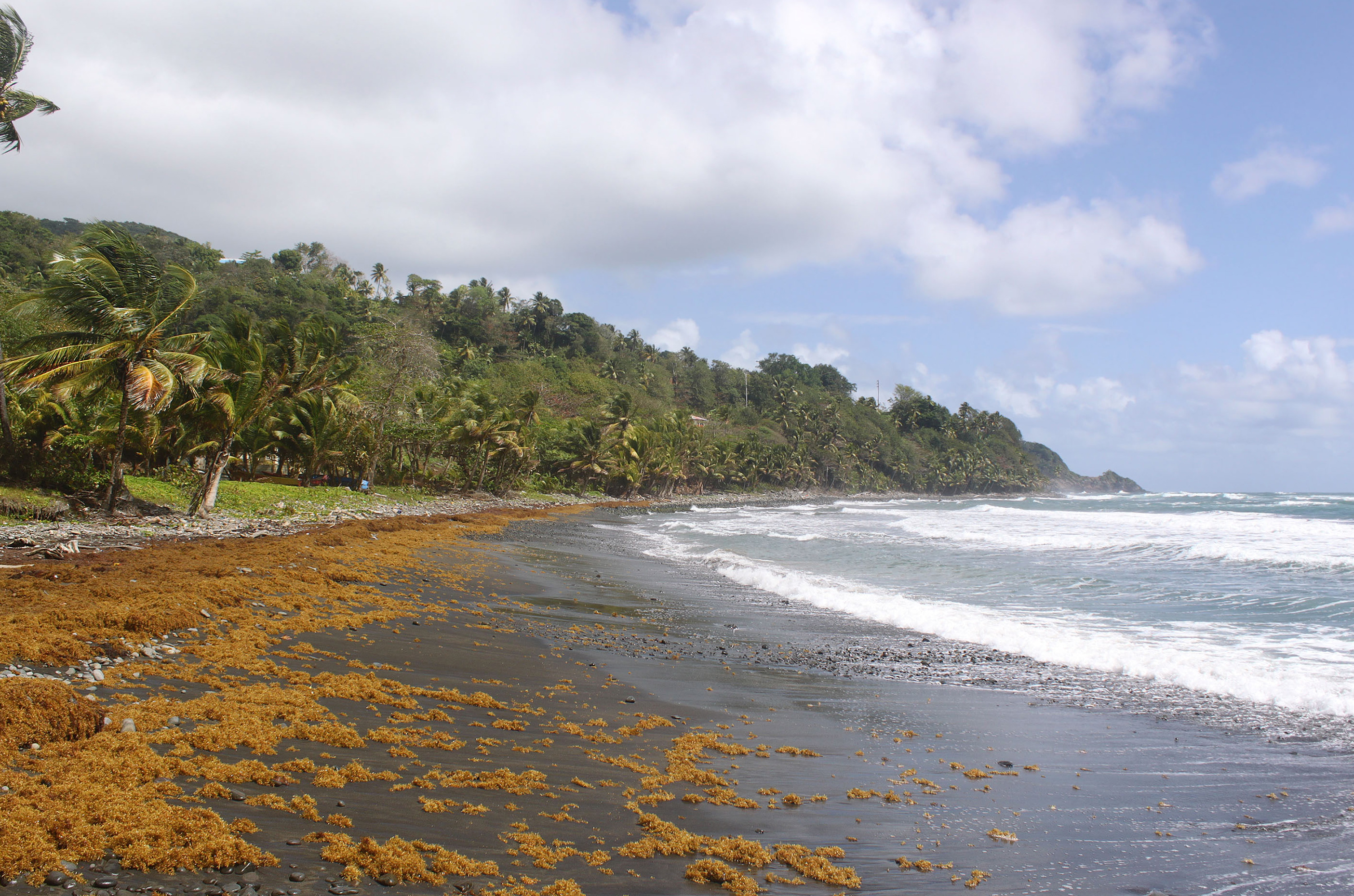 Windstar Caribbean, Black sand beach, Dominica