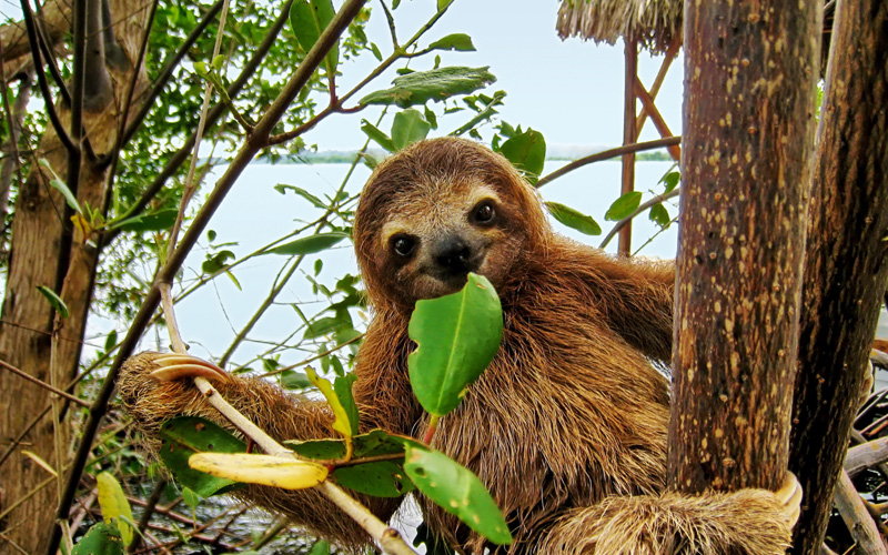 Windstar Panama Canal Cruises Sloth, Costa Rica