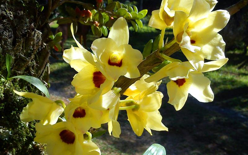Costa Rica Orchid - Windstar Cruises