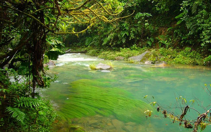 Jungle River - Windstar Cruises
