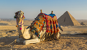 Africa Egyptian camel pyramids of Giza Egypt