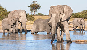 Chobe National Park - AmaWaterways