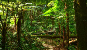 Azamara Club Cruises - Rainforest Ferns
