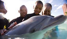 Carnival Cruise Lines family interacting with dolphin
