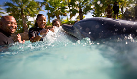 Carnival Cruise Lines family swimming with dolphins