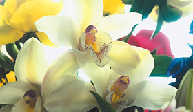 Celebrity Cruises beautiful assortment of orchids
