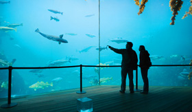 Celebrity Cruises couple viewing an exhibit at the Atlantic Sea Park
