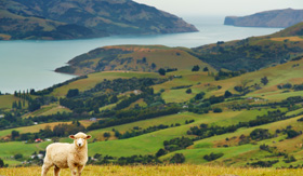 Celebrity Cruises New Zealand landscape banks peninsula