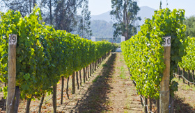 Celebrity Cruises Vineyard in Chile