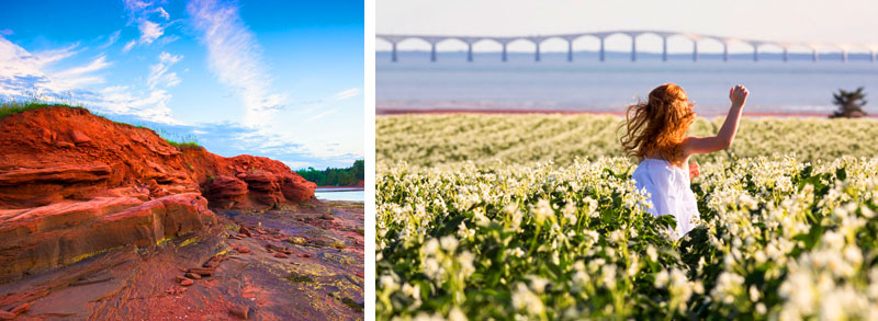 Coastal cliffs and flower fields near Charlottetown, PEI