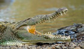 Crystal Cruises american crocodile Tarcoles River