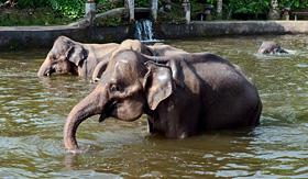 Crystal Cruises elephant show Bali Island Indonesia
