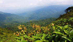 Crystal Cruises Monteverde Cloud Forest Reserve Costa Rica