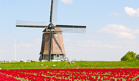 Crystal Cruises tulips and windmill in Holland
