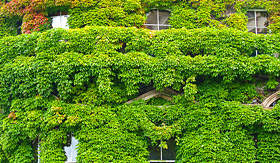 Cunard Line building covered with grapes vine New Zealand Auckland