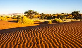 Namib Desert Tour - Cunard Line