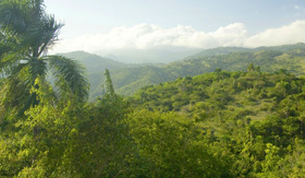 Dominican Republic Forests