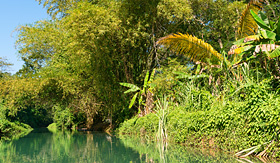 Holland America Line wilderness along the Martha Brae River Falmouth Jamaica