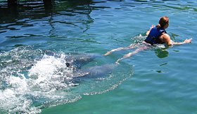 Holland America Line women enjoying a dolphin ride