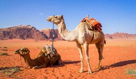 MSC Cruises Wadi Rum Desert