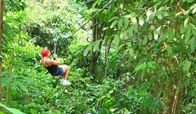 Zipline Through the Lush Jungle in St. Kitts