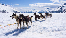 Oceania Cruises Alaska dog sledding