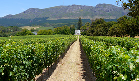 Oceania Cruises grape farm near Cape Town South Africa