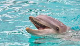 A playful dolphin