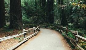 Hiking trail in Muir Woods