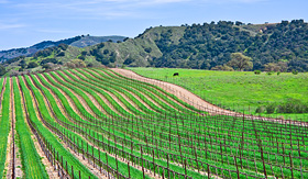 Princess Cruises a vineyard landscape near Santa Barbara California